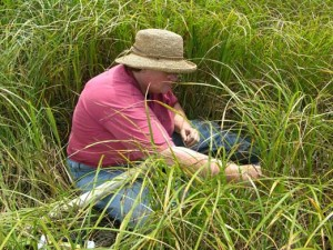 Cindy Gilmour doing mercury research in a marsh