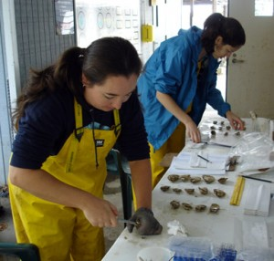Two researchers dissecting oysters.