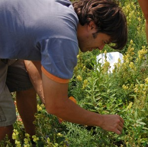 John Parker tends to one of his plants in the field.