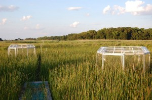 Research marsh with two plastic chambers enclosing two different patches of plants.