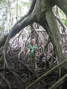 Photo of scientist standing under the roots of a mangrove tree.