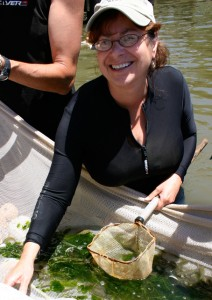 Denise Breitburg holding net and standing in water surveying animals.