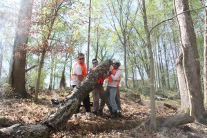 Photo of four men in orange safety vests clearing a fallen tree trunk from a trail.