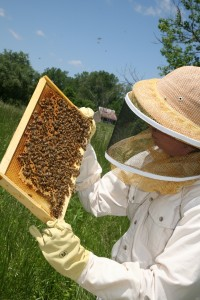 Photo of woman wearing protective clothing and examining a beehive.