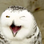 Laughter of a Snowy Owl