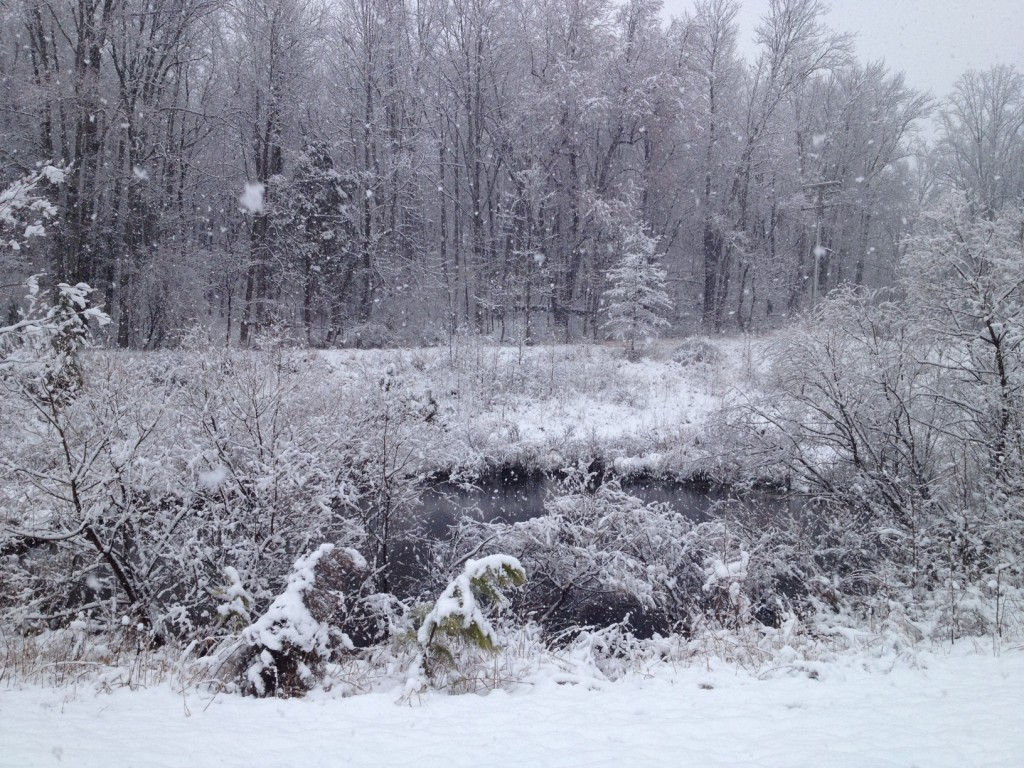 SERC pond on the morning of March 25. The short-lived spring snowstorm dumped up to 6 inches throughout Maryland, but most of it melted within 24 hours. (Kristen Minogue)