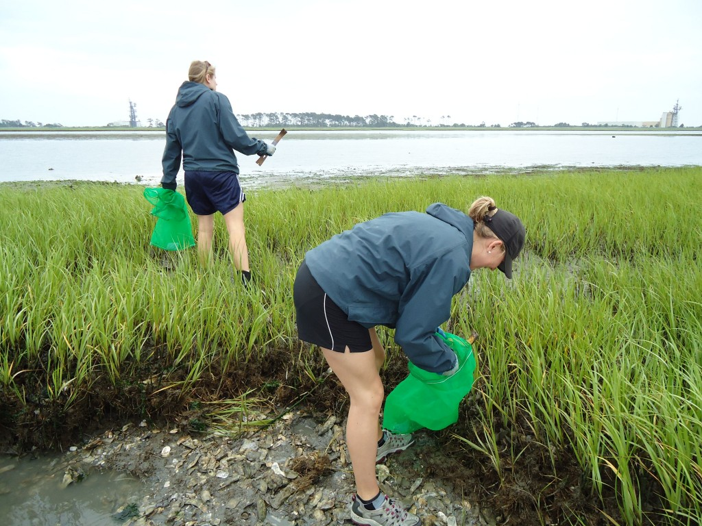 Kristy Hill and Michelle Repetto hunt for oysters on an exposed marsh in Chincoteague Bay. (Katrina Lohan)