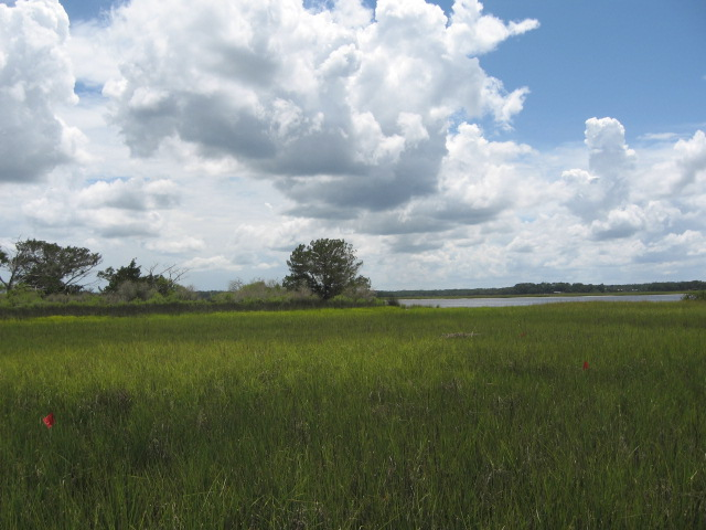 A Spartina-filled salt marsh near St. Augustine, Fla. (Lily Durkee)
