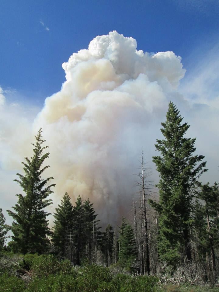 Intense fire burns near Crane Flat helibase, close to the Yosemite research plot. (Gus Smith/NPS)