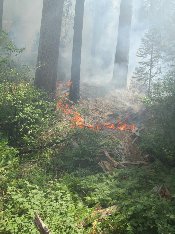 A low-intensity backfire burns the understory of the Yosemite research plot. (Gus Smith/NPS)