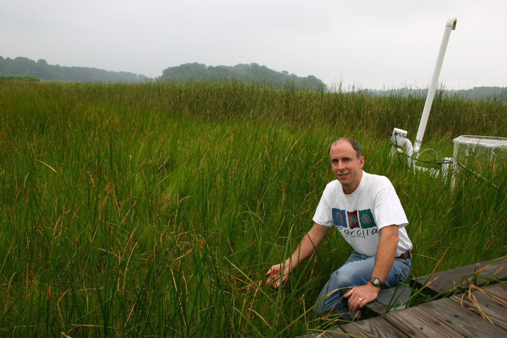 Pat Megonigal on SERC's experimental wetland in Maryland. Sea level in mid-Atlantic marshes is rising at roughly 3 mm/year. So far this marsh has been able to keep pace.