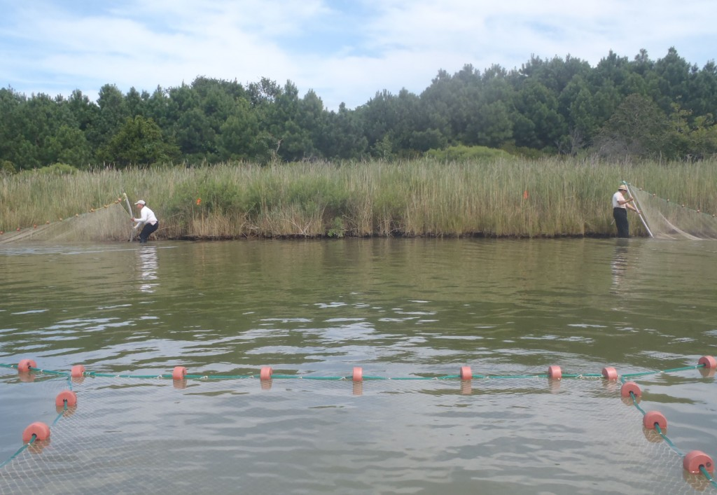 After jumping, step 1: Drag the ends of the net along the marsh edge.