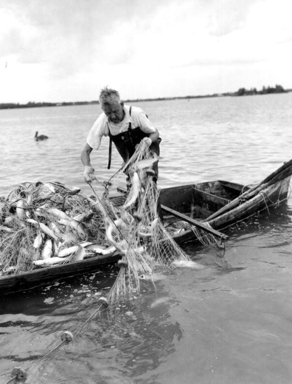 Commercial mullet fishing in 1955. (Monts de Oca, C. Morris courtesy of State Archives of Florida)