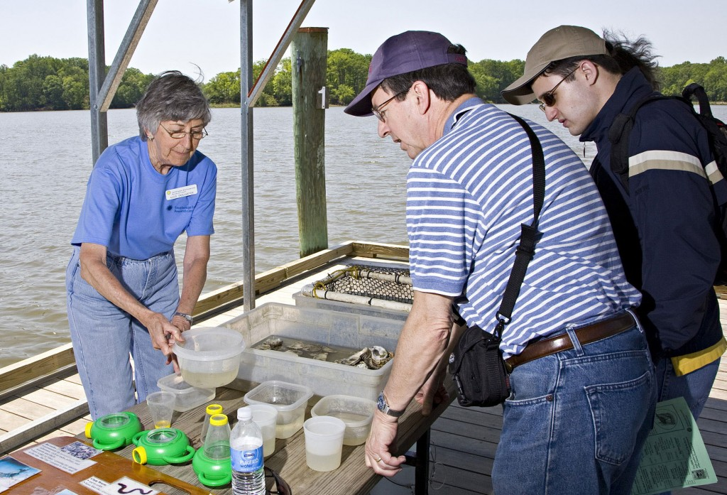 Photo: veteran volunteer alice dollmeyer (left) teaches visitors about oysters at serc's annual open house. (Credit: Smithsonian Institution)