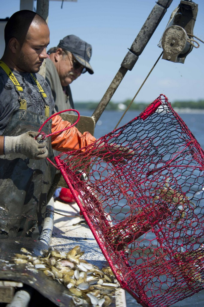 Photo: Two Maryland watermen pull in the catch from a crab pot. (Credit: Benjamin Wilson)