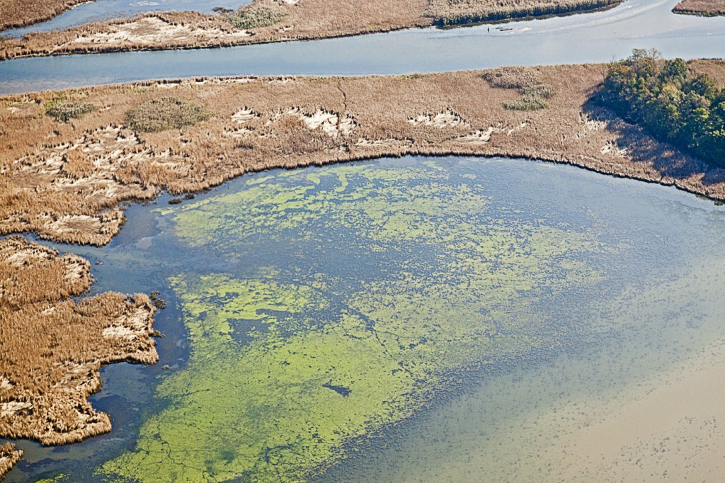 Image: Algal bloom near Chesapeake Bay. (Credit: Chuck Gallegos/SERC, with aerial support from LightHawk)