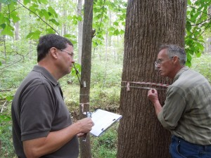 SERC technician Jay O'Neill shows volunteer Steve Myers how to measure the width of a tree. The return of the floodplain could transform the forest as the soil becomes wetter. (SERC)