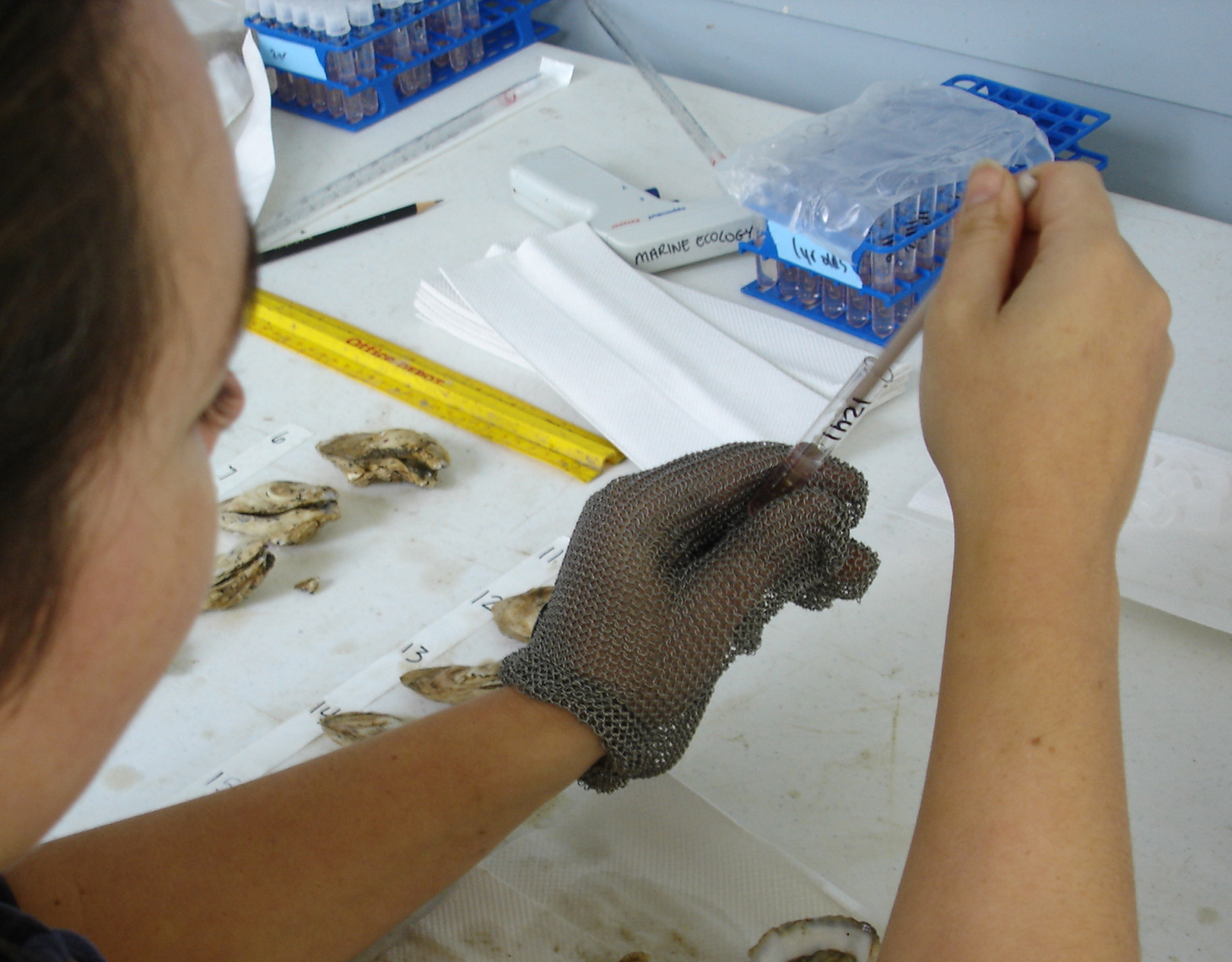 Head technician Rebecca Burrell places oyster tissue for disease analysis in media containing agar