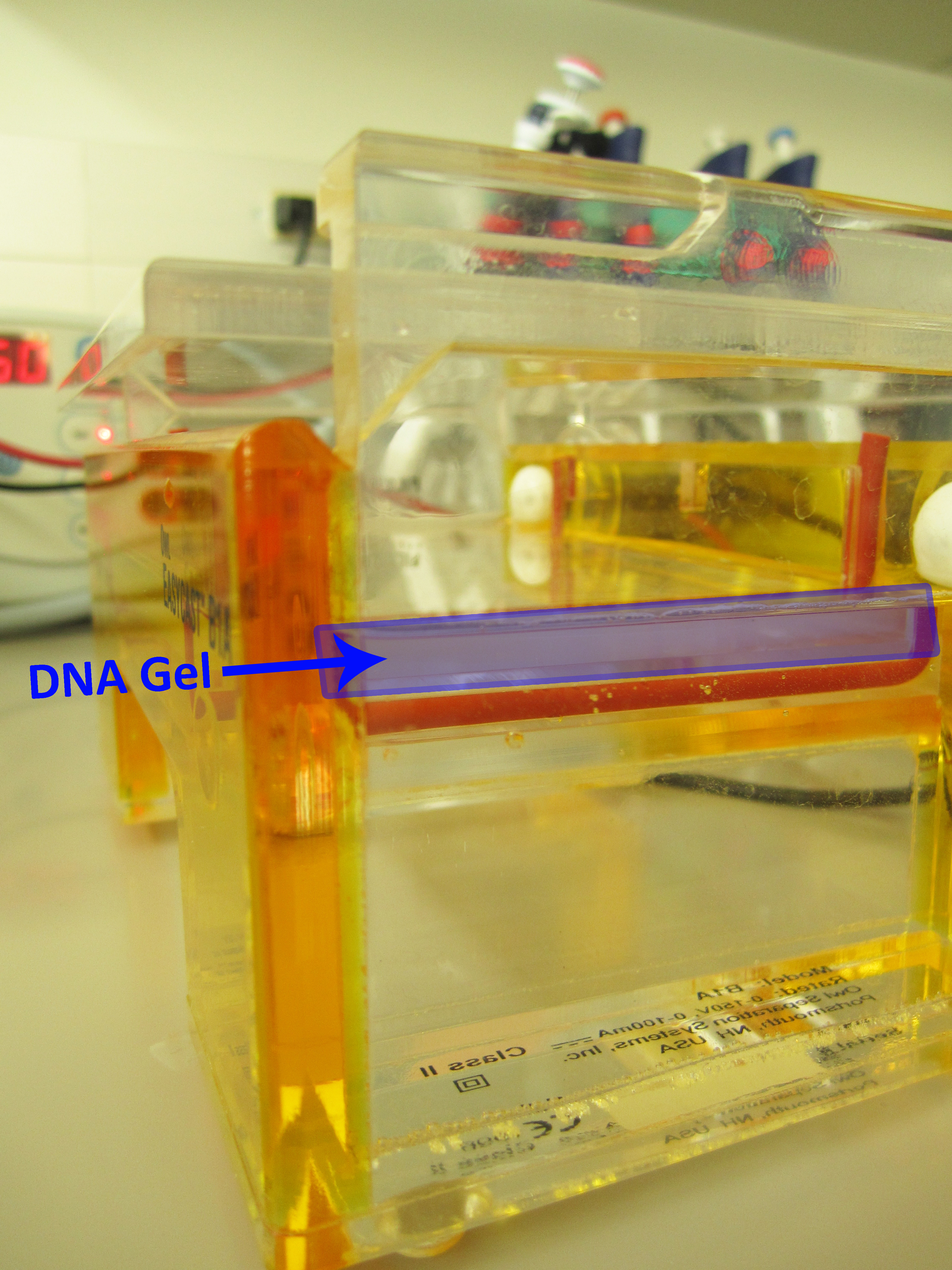 Agarose is used to make gels for DNA analysis