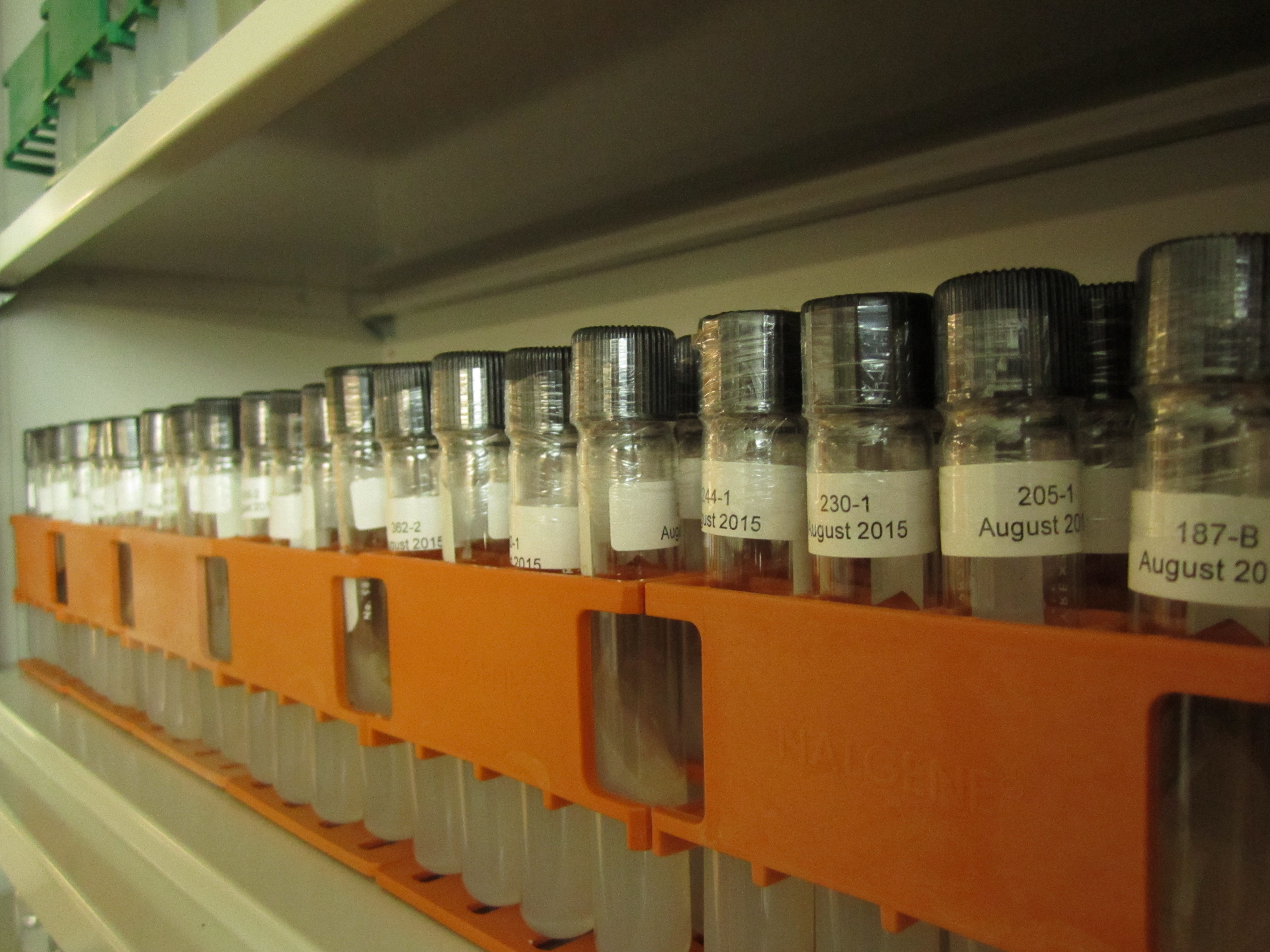 NAOCC's orchid symbiotic fungi collection