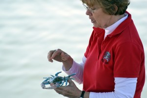 Jan teaches students blue crab (Callinectes sapidus) anatomy