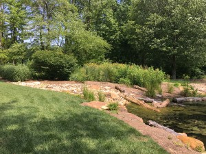 The garden pond where Dove is shifting the focus to native species