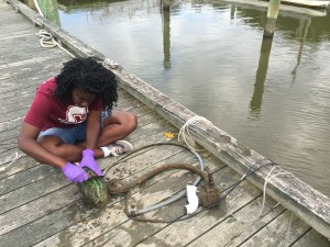 Graham cleans her equipment of marine organisms