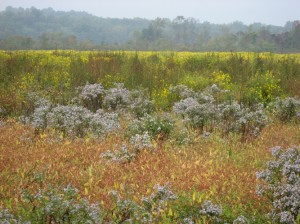 The fall colors in Maryland's Jug Bay reveal the rich plant diversity found in tidal freshwater wetlands.  Photo by A. Baldwin.