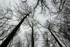 A bare forest canopy.