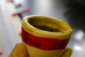 Photo of hand holding cup of mixture containing poison ivy essence