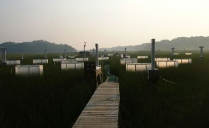 A photo of a marsh with a boardwalk and plastic chambers surrounding various patches of plants.