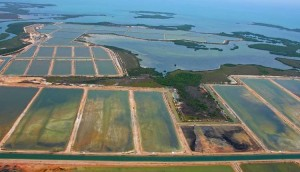 Aerial photo of a coastal shrimp farm.