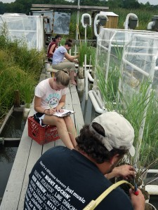 Four people sitting on a boardwalk in a marsh, measuring plants.