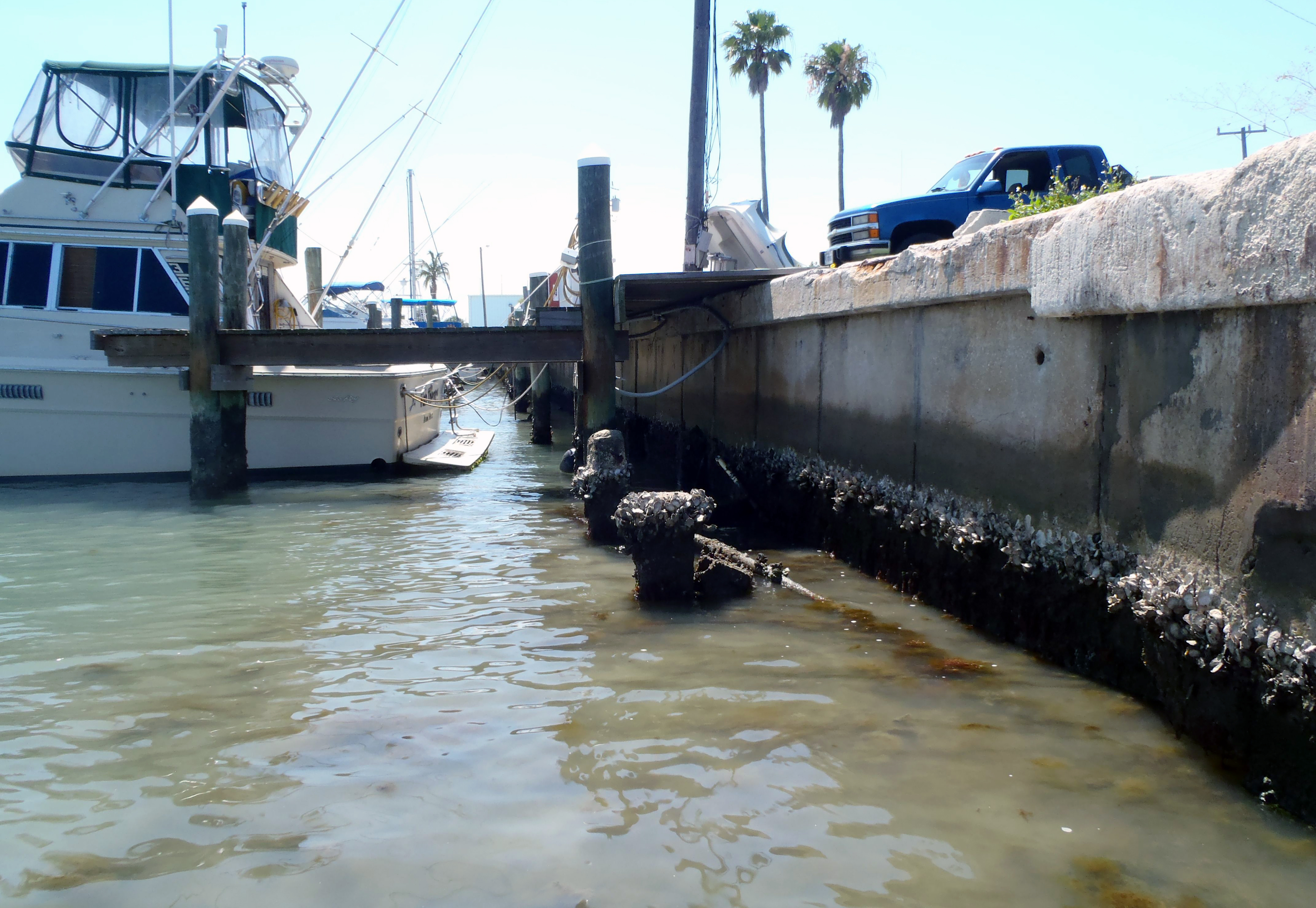Shorelines » Blog Archive From the Field: Sea Wall Scraping - Shorelines