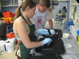 Paige and Mike begin to dissect the fish.