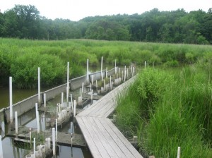 """Marsh organs"" track the growth and height of marsh plants compared to the water level."
