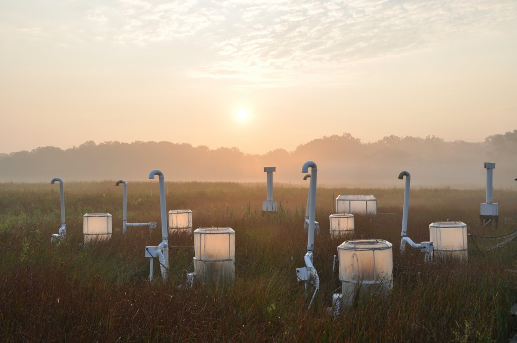 Global Change Research Wetland (Thomas Mozdzer)