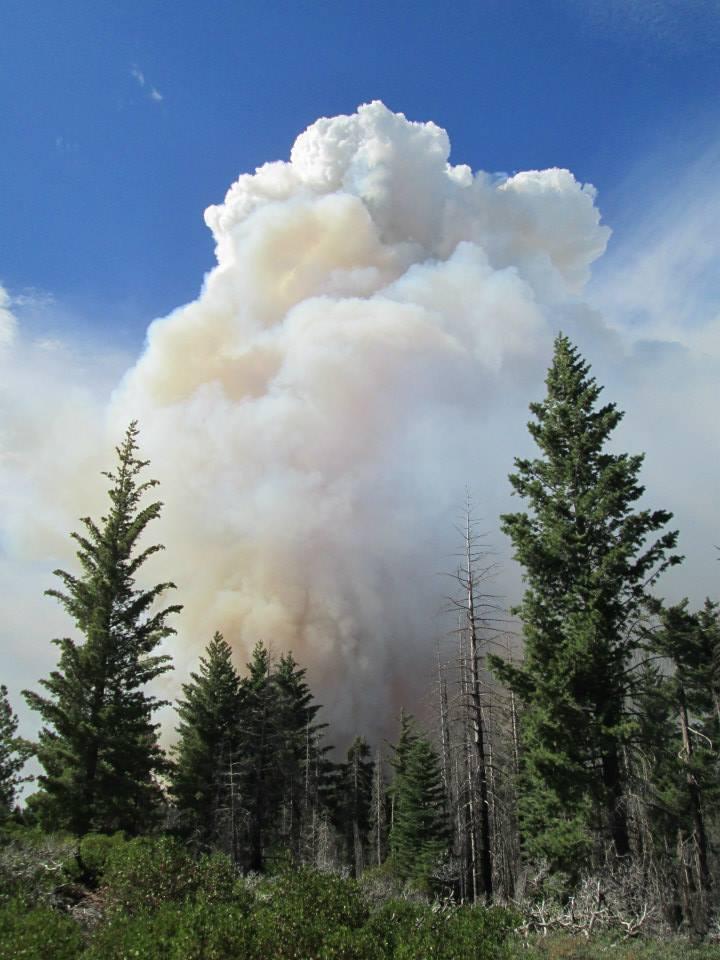 Intense fire burns near Crane Flat helibase, close to the Yosemite research plot. (Gus Smith/NPS)
