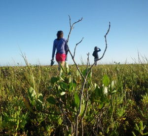 Emily Dangremond checks out dwarfed white mangroves in Baja California. (C. Johnston)