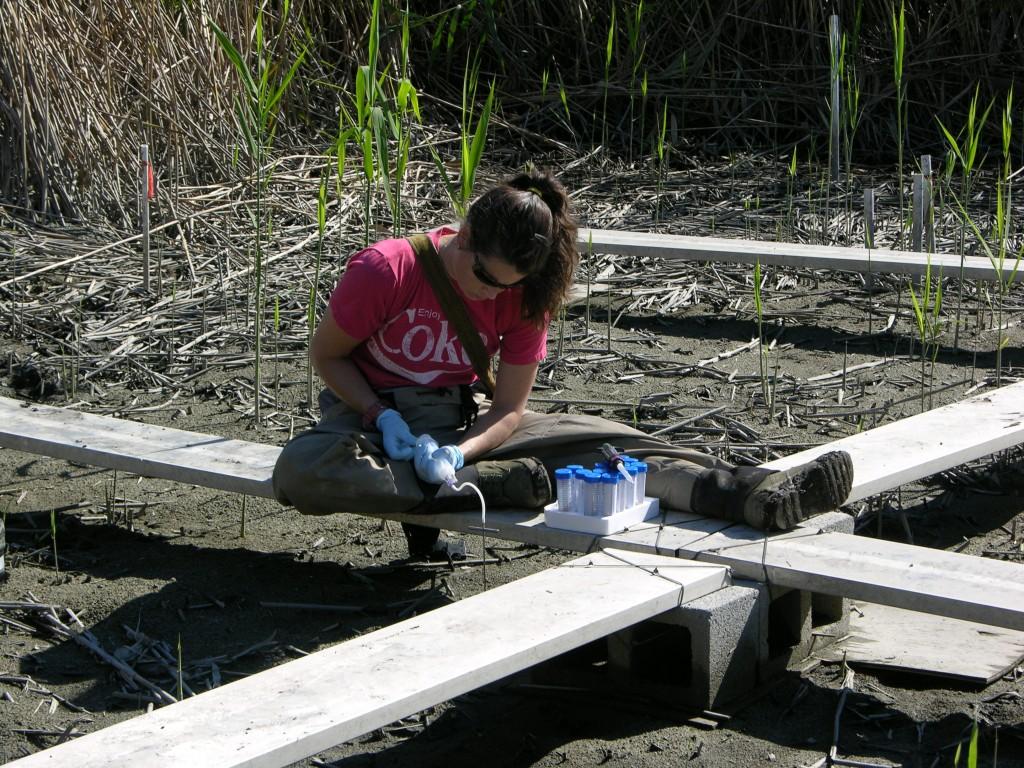 Ally Bullock, a technician in SERC's mercury lab, draws pore water samples from Berry's Creek. (SERC)