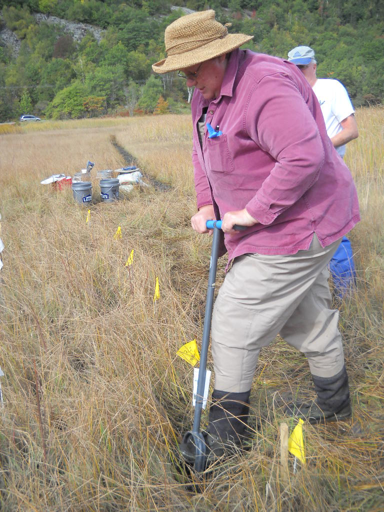 Cynthia Gilmour collects a soil core from a marsh in Maine, to test in lab for mercury and other chemicals. (SERC)