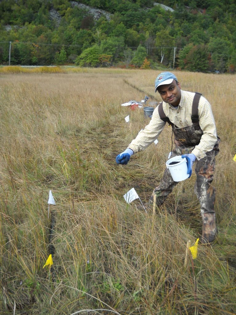 Upal Ghosh spreads SediMite, a mixture containing activated carbon, onto a mercury-polluted marsh in Maine. (SERC)