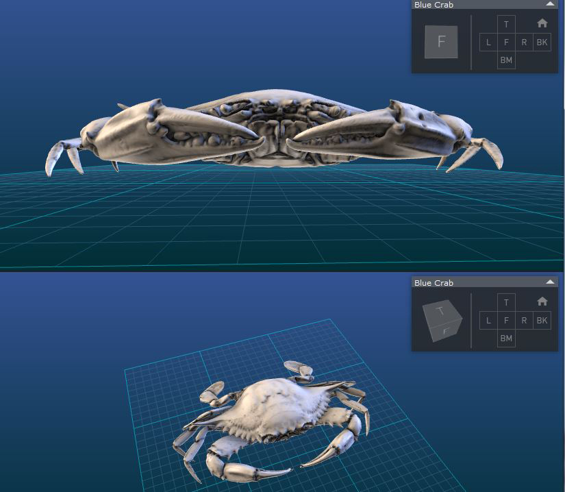 Split-screen capture of the blue crab, showing how visitors can rotate and zoom in. (Smithsonian Institution)