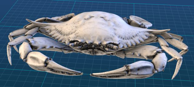 Image capture of the blue crab from Smithsonian X3D. (Credit: Smithsonian Institution)