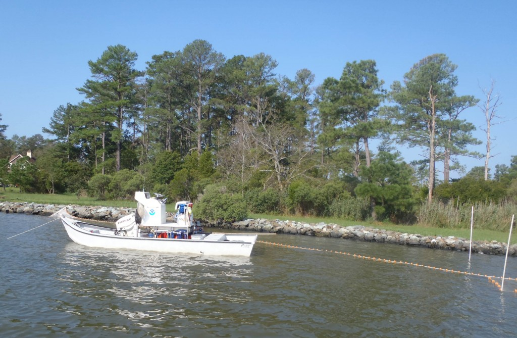 A Chesapeake Bay NOAA mullet skiff. Note the moter near the bow. (SERC)
