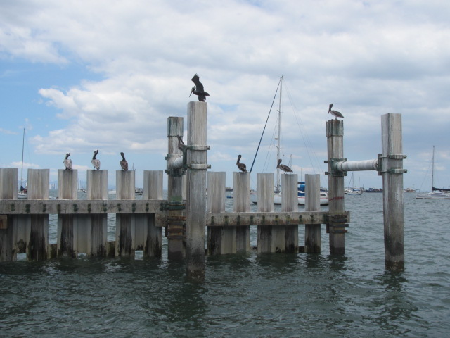 STRI dock at Naos, on the Pacific side of Panama. (SERC)