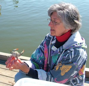 Photo: Alice Dollmeyer inspects a male blue crab on the SERC docks. (Credit: SERC)