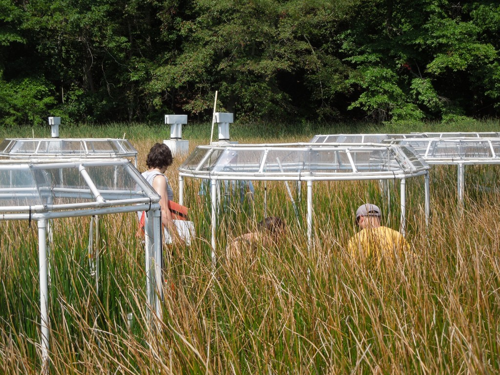Citizen scientist Joseph Downey (left), grad student Rachel Gentile (center) and postdoc Meng Lu (right) collect data at GCREW.