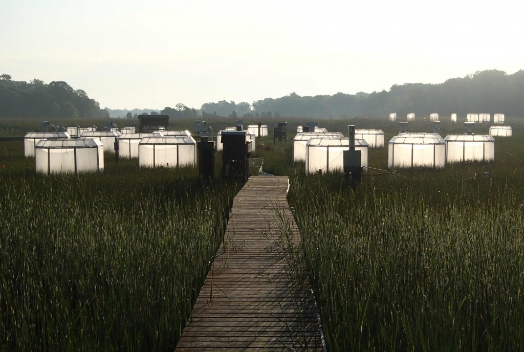 Image: CO2 chambers at SERC's Global Change Research Wetland. (Credit: Melissa Pastore)