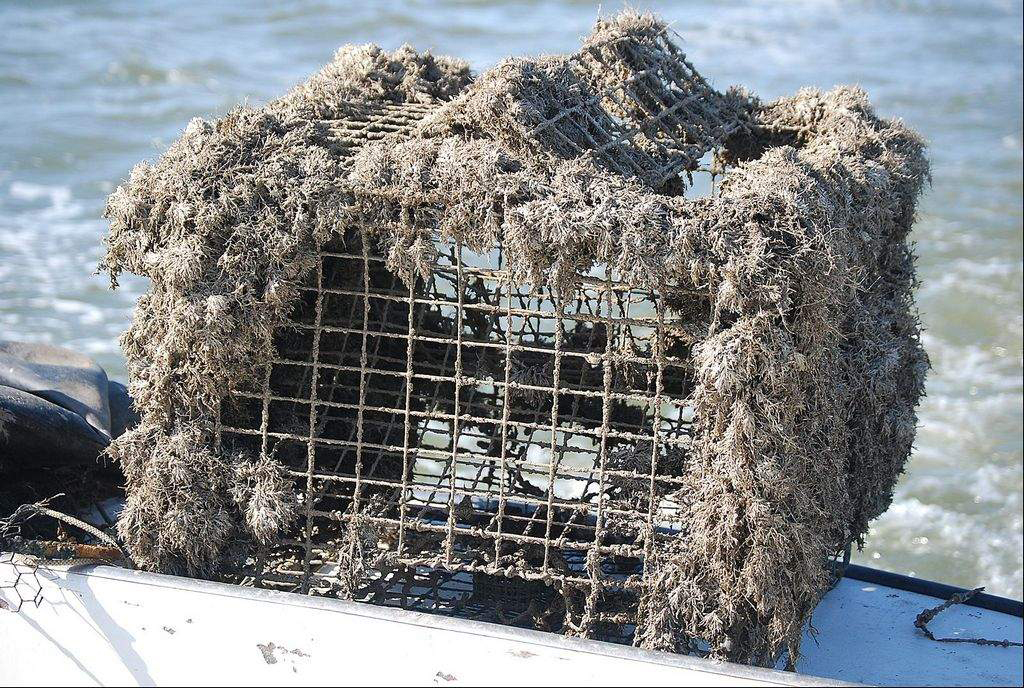 Image: A ghost pot pulled out of Chesapeake Bay. (Credit: Michael Reid/Southern Maryland Newspapers)